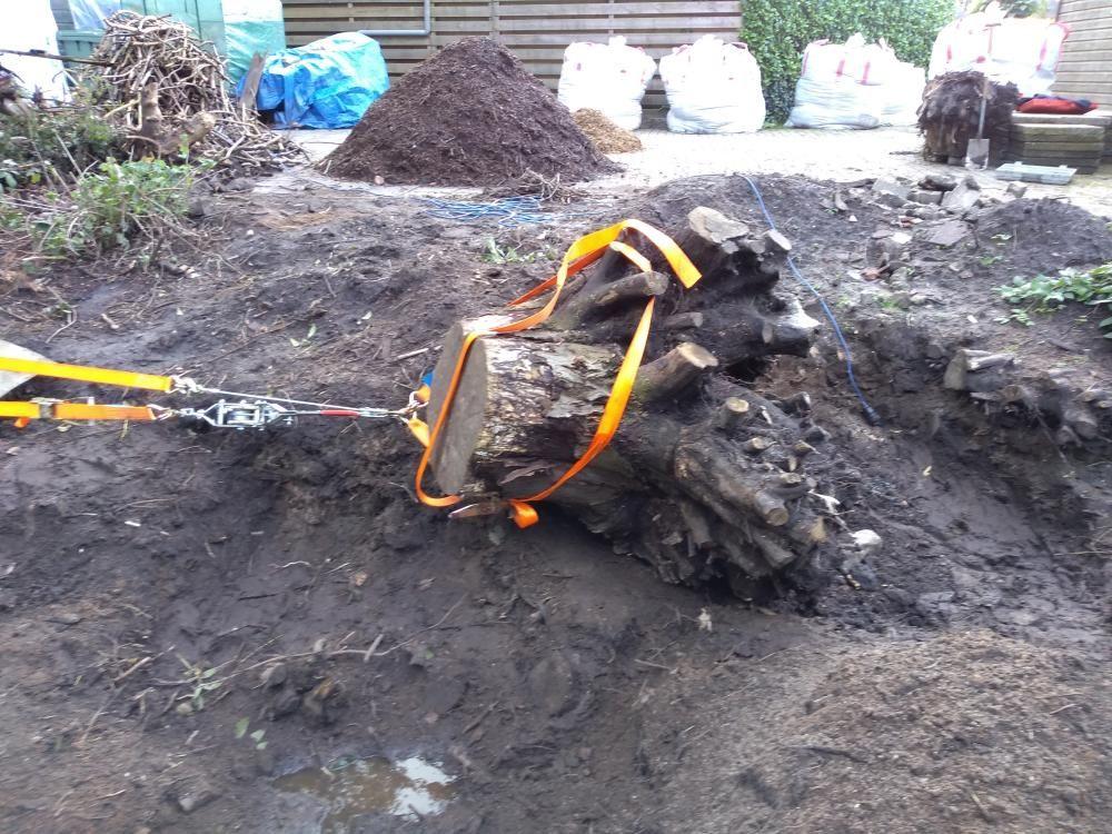 Pulling tree stump1.jpg